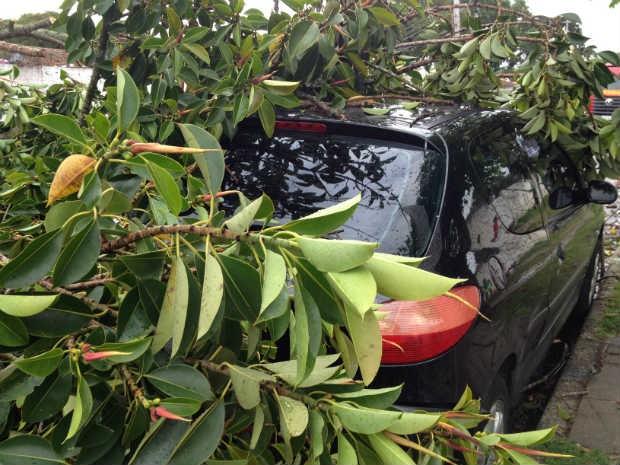 Carro foi atingido por árvore, no Rebouças (Foto: Alyohha Moroni/RPC TV)