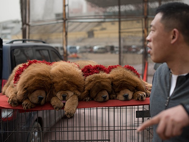 Mais filhotes à venda na China (Foto: Ed Jones/AFP)