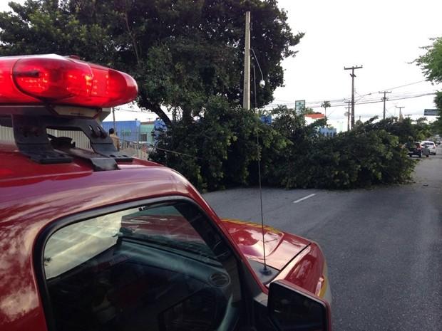 Bombeiros foram acionadas para retirar a árvore da pista (Foto: Walter Paparazzo/G1)