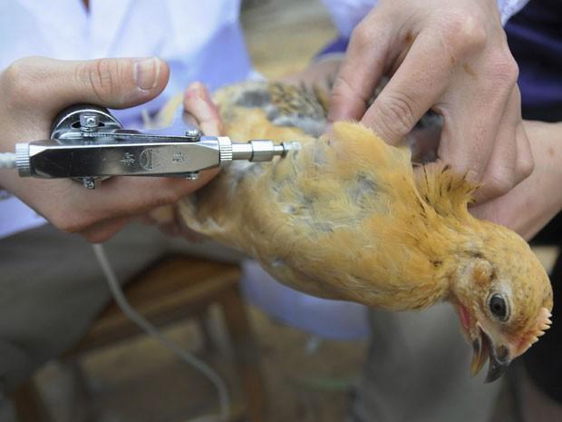 Autoridades chinesas examinam aves para estudar vírus H7N9 (Foto: Reuters/China Daily)