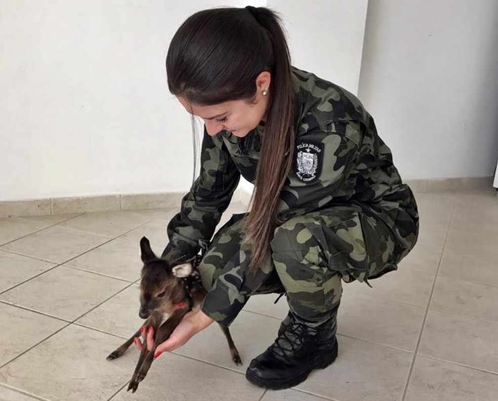 Animal estava sozinho e foi levado para centro veterinário da Udesc (Foto: Polícia Militar Ambiental/Divulgação)