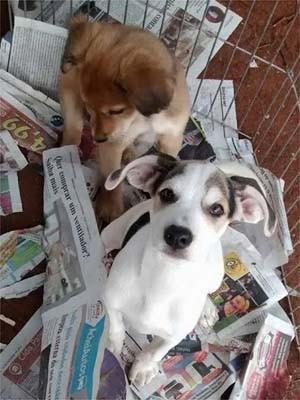 """Primeira edição do """"Adote Pet"""" estarão disponíveis 25 filhotes de cães e 25 filhotes de gatos para adoção (Foto: Alex Girnius)"""