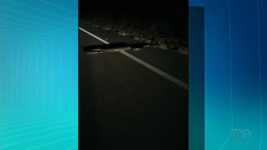 Motorista encontra sucuri em rodovia e ajuda animal a atravessar pista