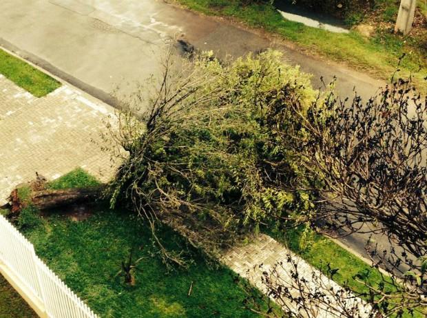 Chuva forte que atinge o estado desde sábado (14) também derrubou árvores em Curitiba (PR) (Foto: Monique Silva / G1)