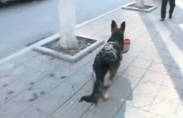 hinês usa seu cão de estimação para fazer compras no mercado. (Foto: Reprodução/YouTube)