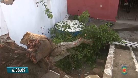 Carro capota em curva e só para após arrancar árvore em Campina Grande