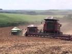 Preço do feijão está mais baixo nesta safra e desanima os agricultores