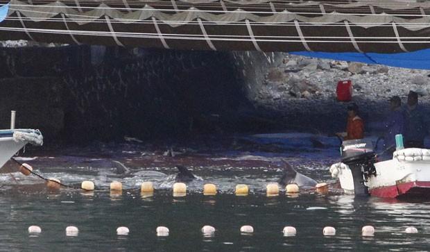 Em outra fotografia é possível ver a rede de pesca e exemplares de golfinho se debatendo. Ao fundo a água já vermelha, que seria o sangue desses mamíferos, que são mortos para o consumo de sua carne (Foto: Adrian Mylne/Reuters)