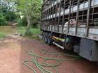 Caminhoneiro é flagrado jogando porcos e fezes em ribeirão no TO