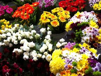 Flores estarão em exposição no FestFlor, em Brasília (Foto: Divulgação)