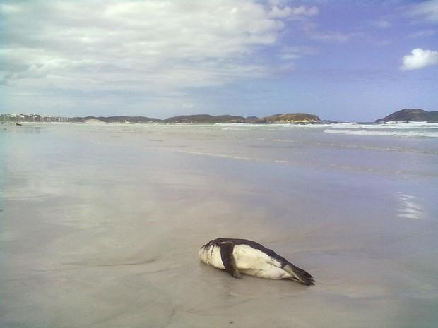 O animal foi encontrado sem vida com ferimento na cabeça.  (Foto: Kleber Santos/Arquivo pessoal)