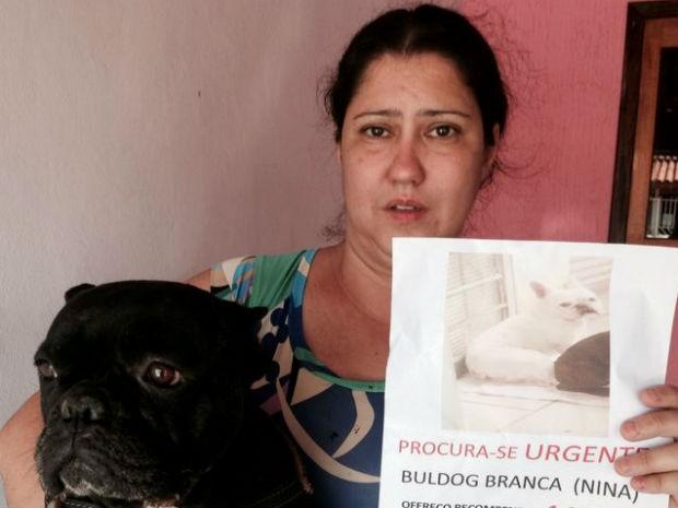 Sorocaba procura por fêmea de buldog francês (Foto: Ana Carolina Levorato/G1)