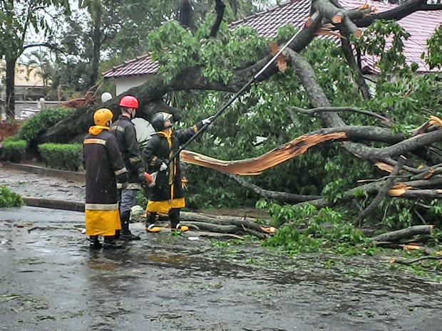 Bombeiros tiveram trabalho para cortar as árvores (Foto: Fabrício Fidelis/TEM VC)