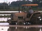 Chuva constante dificulta o preparo do solo para o plantio do arroz no RS
