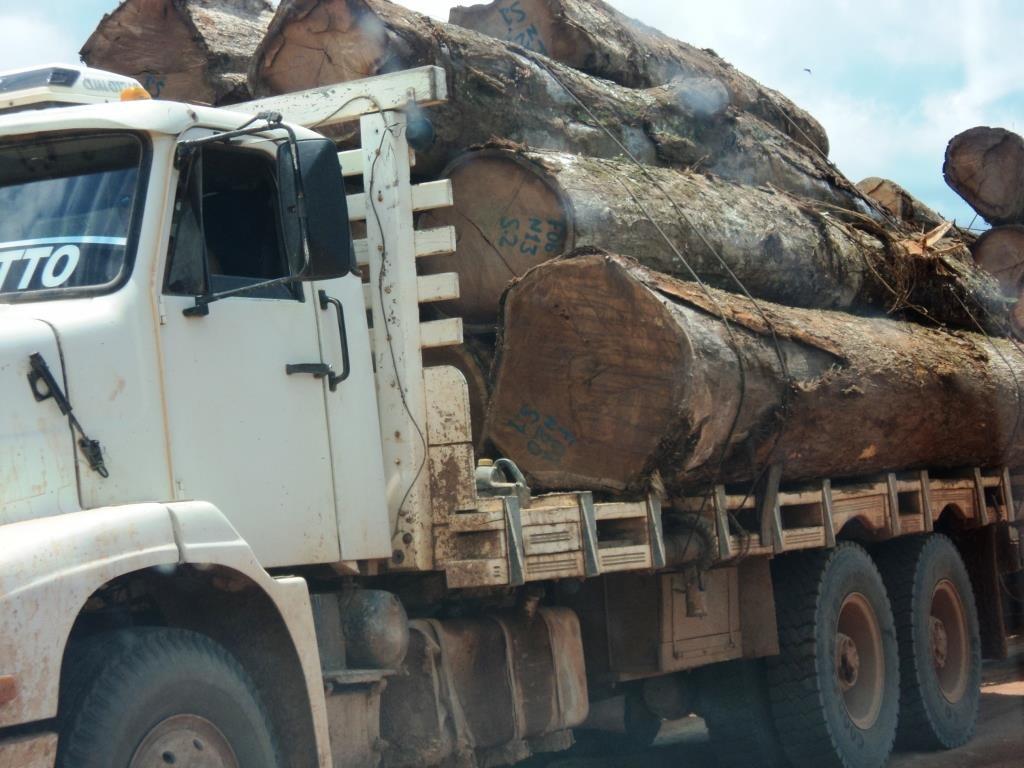 46% das áreas de exploração de madeira são ilegais, como Terras Indígenas  (Foto: Arquivo Instituto Centro de Vida (ICV))