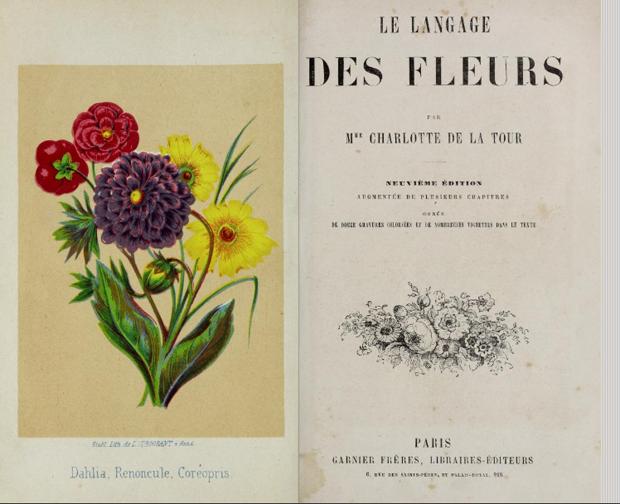 Floriografia, a linguagem das flores e seus significados (Foto: POR FLO ATELIER BOTÂNICO)