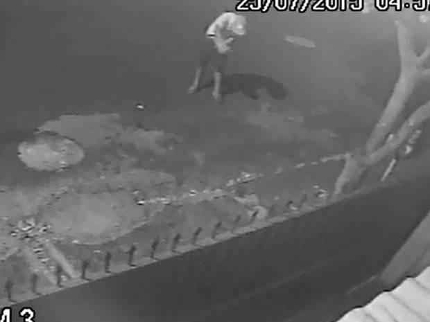 Jovem é flagrado enforcando gato por uma câmera de segurança (Foto: Spavo/Colaboração)