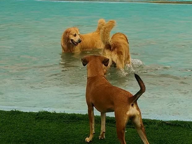 Cães brincam na piscina do parque. (Foto: Cristina Boeckel/ G1)