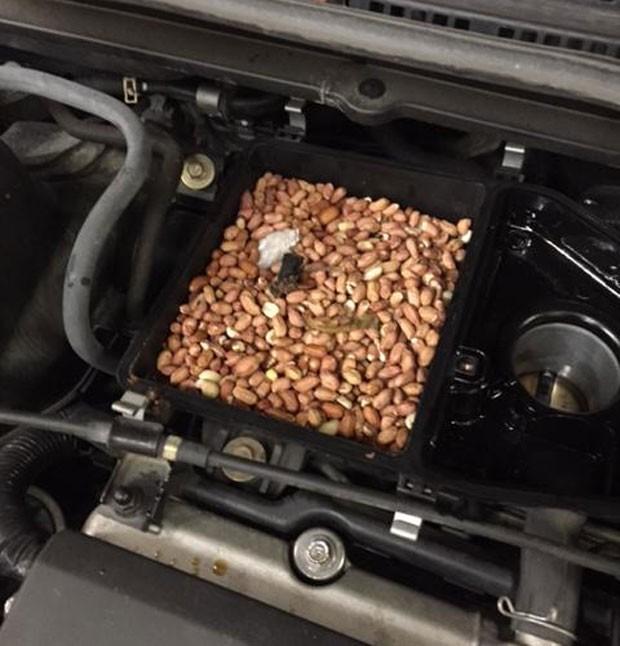 g1 mec nico checa carro com defeito e acha estoque de amendoins de roedor not cias em. Black Bedroom Furniture Sets. Home Design Ideas