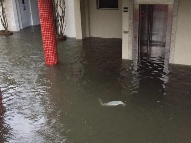 Água invadiu prédios na Ponta da Praia  (Foto: Alysson Reis/Arquivo pessoal)