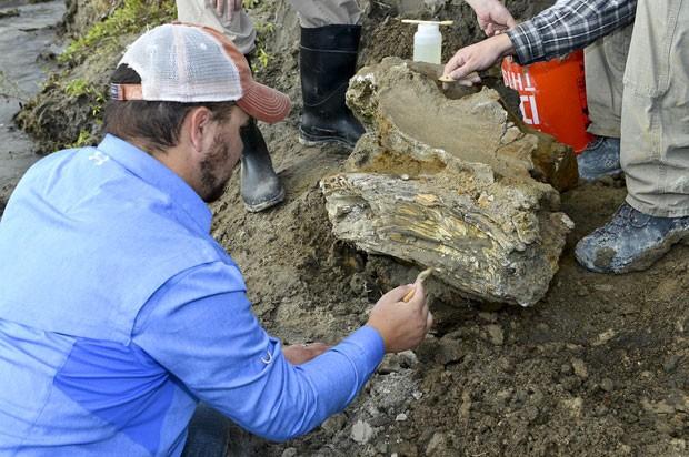 Estudante de geologia da Universidade Estadual de Idaho limpa fóssil do crânio de um mamute, encontrado perto de uma represa, em Idaho. A imagem é de 16 de outubro, mas só foi divulgada nesta semana (Foto: Dave Walsh/Escritório de Recuperação/AP)