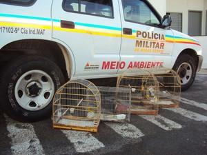 Apreensão de pássaros em Uberlândia (Foto: Polícia Militar Ambiental/Divulgação)