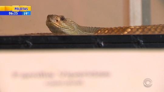 Serpentário do Museu de Ciências Naturais do RS é arrombado