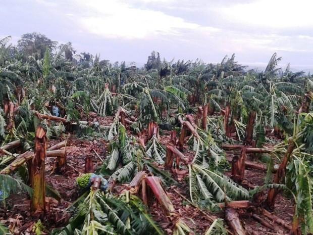 Cidade do Vale do Ribeira foi atingida por tempestade (Foto: Sindicato Rural do Vale do Ribeira/Divulgação)