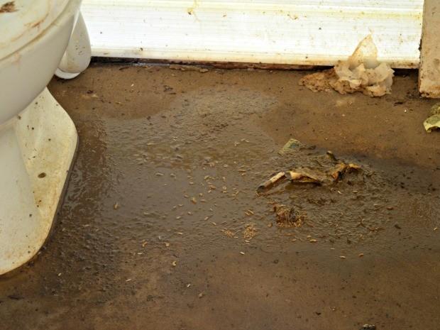 Em abrigo de imigrantes em Rio Branco, banheiros sujos geram a criação de larvas (Foto: Caio Fulgêncio/G1)