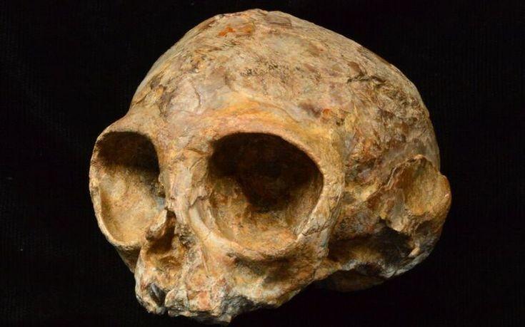 Crânio  (Foto: Divulgação/ Leakey Foundation )