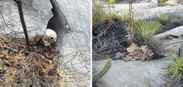 Ossos foram encontrados na zona rural de Acari, RN, por caçador (Foto: Davi de Oliveira Neto)