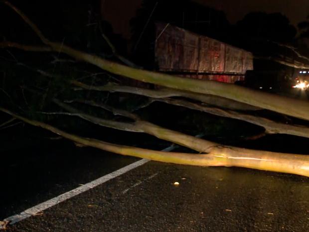Árvore caiu na Av. Presidente Kenedy, na Zona Leste de Teresina (Foto: Reprodução/TV Clube)