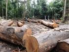 Esquema destruiu 3 mil hectares de floresta nativa em MT, diz Ibama
