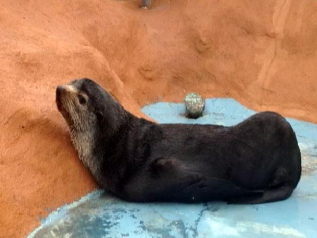 Animal será hidratado e alimentado por veterinários. (Foto: Reprodução/TV Gazeta)