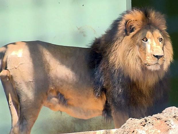 Zoológico de Varginha deve ser reaberto em 30 dias  (Foto: Reprodução EPTV)