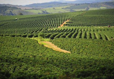 agricultura_cafe_colheita_lavoura (Foto: Ernesto de Souza/Ed. Globo)
