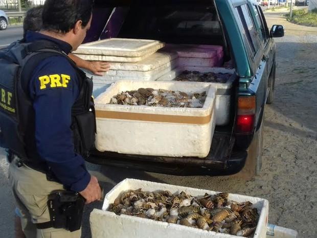 Carga de lagosta e polvo estava sendo transportada indevidamente, diz PRF (Foto: Comunicação/PRF)