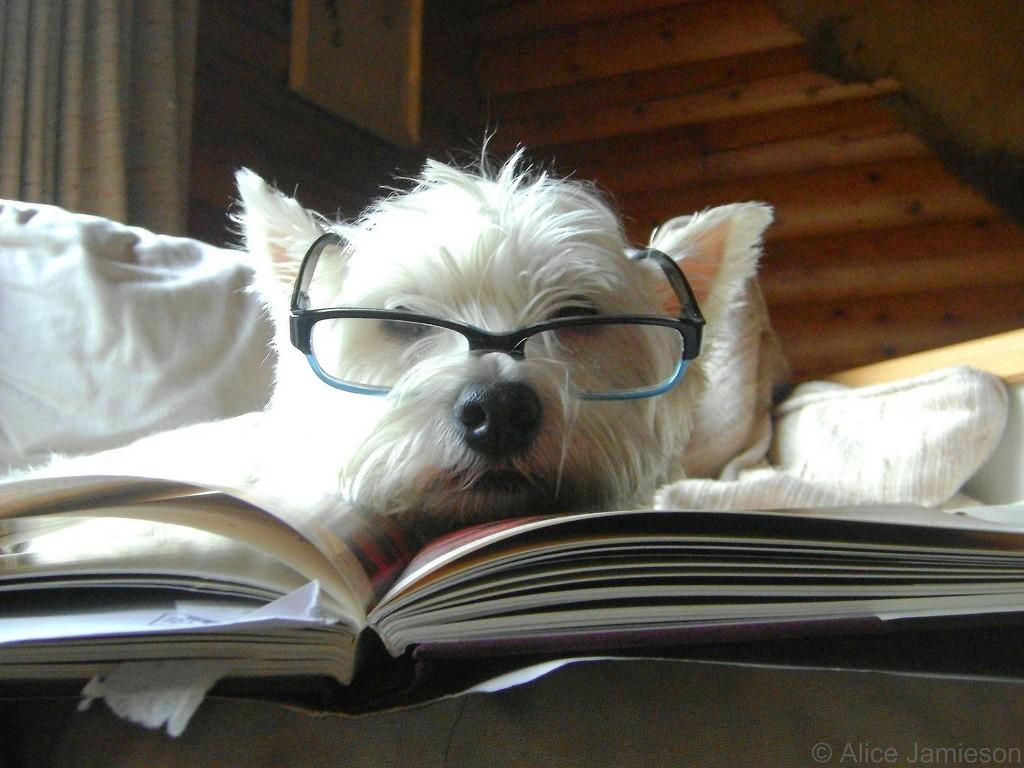 Qual foi o último livro que deu preguiça de terminar?  (Foto: Flickr / alicejamieson)