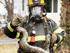 Bombeiros resgatam 4 cobras ao apagar incêndio em casa nos EUA