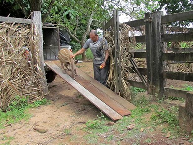 Animais resgatados são devolvidos ao habitat natural, após exames (Foto: Divulgação/Sema)