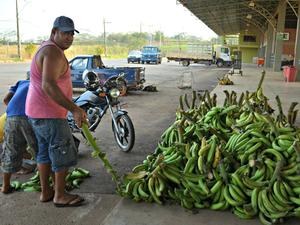 Valdemir Teixeia produz banana e disse que não está produzindo durante a seca (Foto: Aline Nascimento/G1)