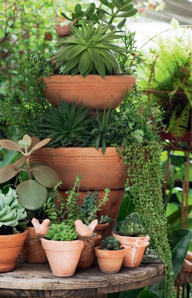 ideias baratas para jardim vertical : ideias baratas para jardim vertical:suculentas-Claudia-Regina-La-Calle-Florida (Foto: Iara Venanzi/Editora