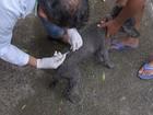Araçatuba inicia campanha de vacinação antirrábica para animais