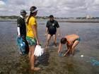 Praia do litoral potiguar vira área foco de conservação ambiental