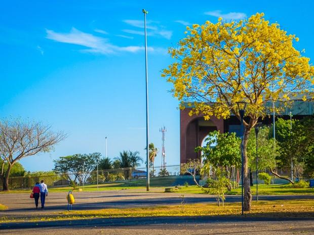 Pedro Igor Almeida também captou a beleza do ipê amarelo na Praça dos Girassóis (Foto: Pedro Igor Almeida)