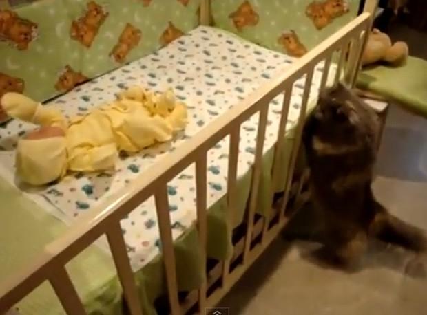 Gato 'curioso' ficou de babá de recém-nascido ao se desbruçar em berço (Foto: Reprodução/YouTube/MsArvensis)
