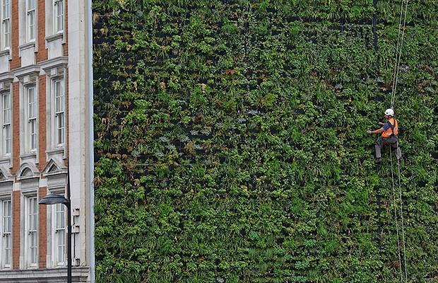 Jardim vertical gigante casa e jardim curiosidades for Plantas muro verde