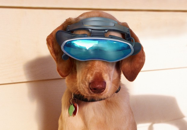 Cachorro com Google Glass (Foto: Thinkstock)