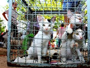 Animais esperam por adoção na feira de cães e gatos. (Foto: Jonathan Lins/G1)