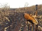 Fogo destrói parte de lavoura de milho e trator em Mandaguaçu